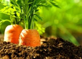 Manger bio pour ne pas manger chimique
