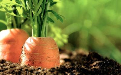 Qui dit manger bio dit cultiver bio