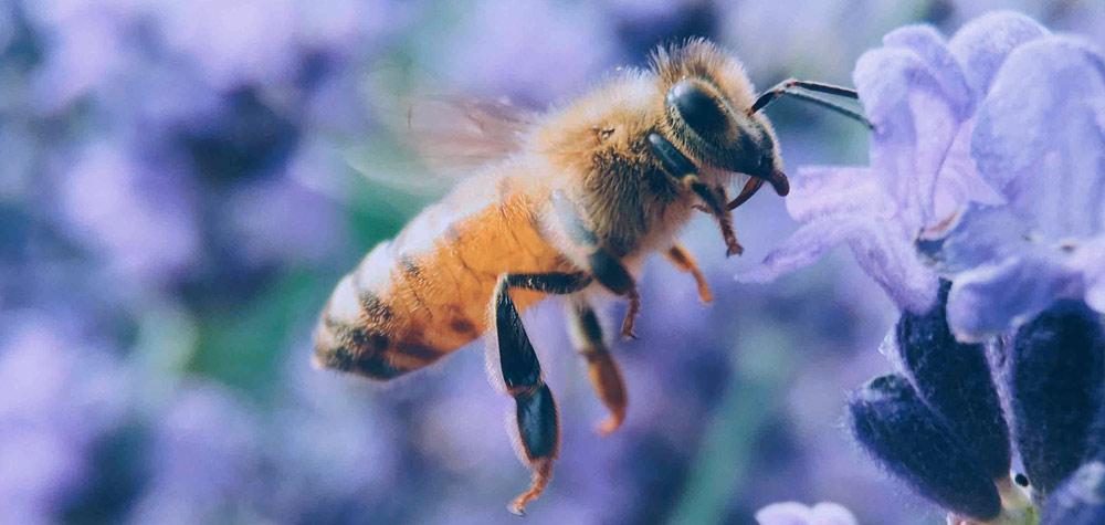 Le pollen : une richesse naturelle