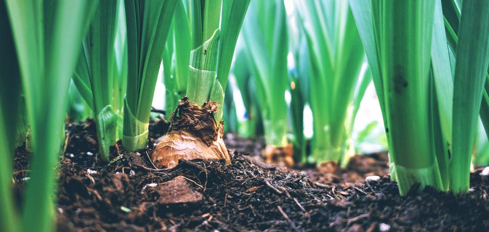 LES OGM, il n'existe pas de preuve de leur non-toxicité – 3