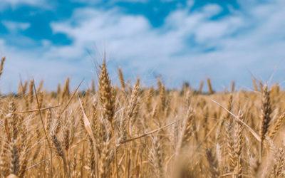 Les OGM, il n'existe pas de preuve de leur non-toxicité – 1