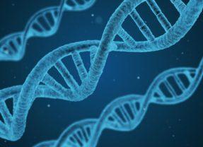 L'épigénétique – Au-delà de la génétique – Partie 1