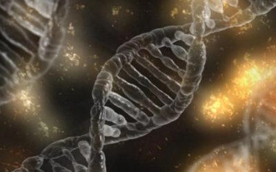 Biologie et génétique – Les dégâts du stress ne sont pas une vue de l'esprit – Partie 5